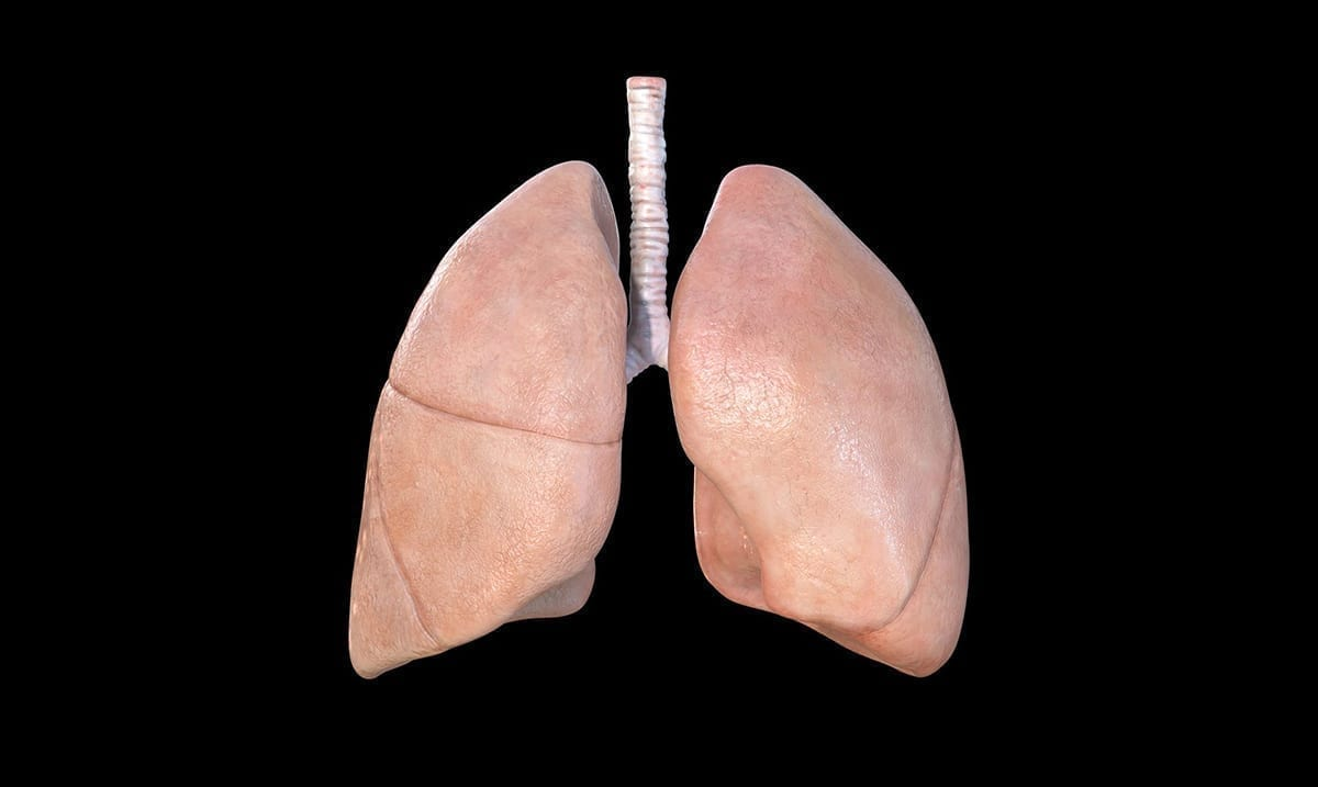 What Coronavirus Actually Does To Your Lungs In VR