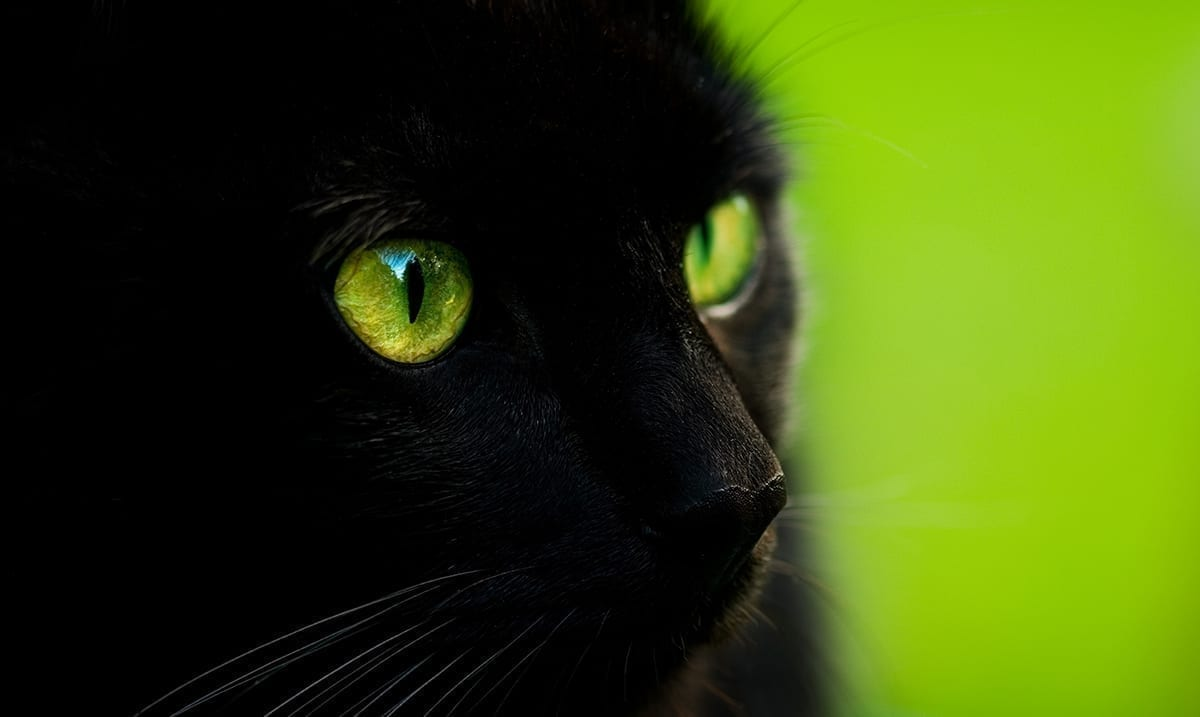 The Healing Power Of Cats – Cats Can Be Empaths Too!