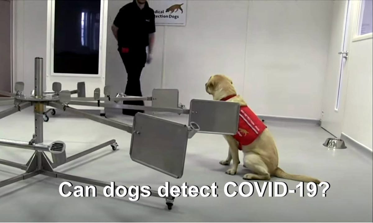 UK Researchers Trying To Train Dogs To 'Sniff Out' COVID-19 Infected People