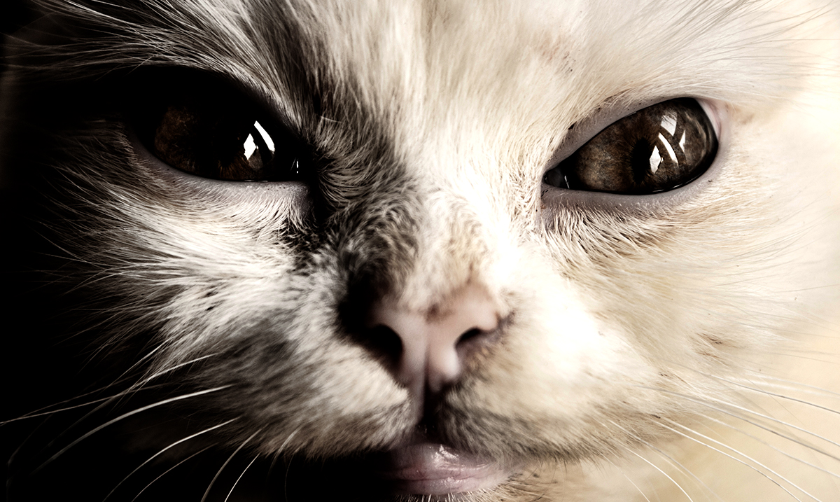 Study Suggests Cats Mirror Their Owners' Personalities