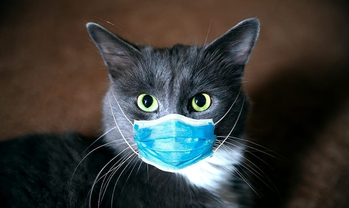 Coronavirus Can Infect Cats – But Not Dogs