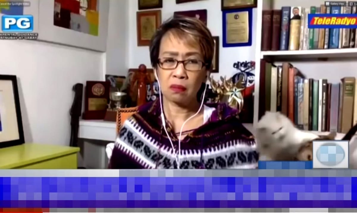 Reporter Tries To Remain Calm As Her Cats Fight In The Background (Footage)