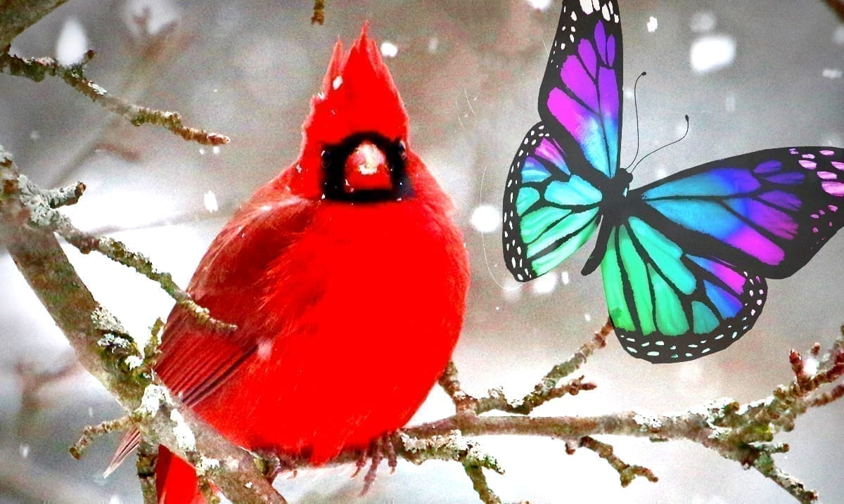 Seeing And Dreaming About Cardinals – Winged Messengers From The Other Side