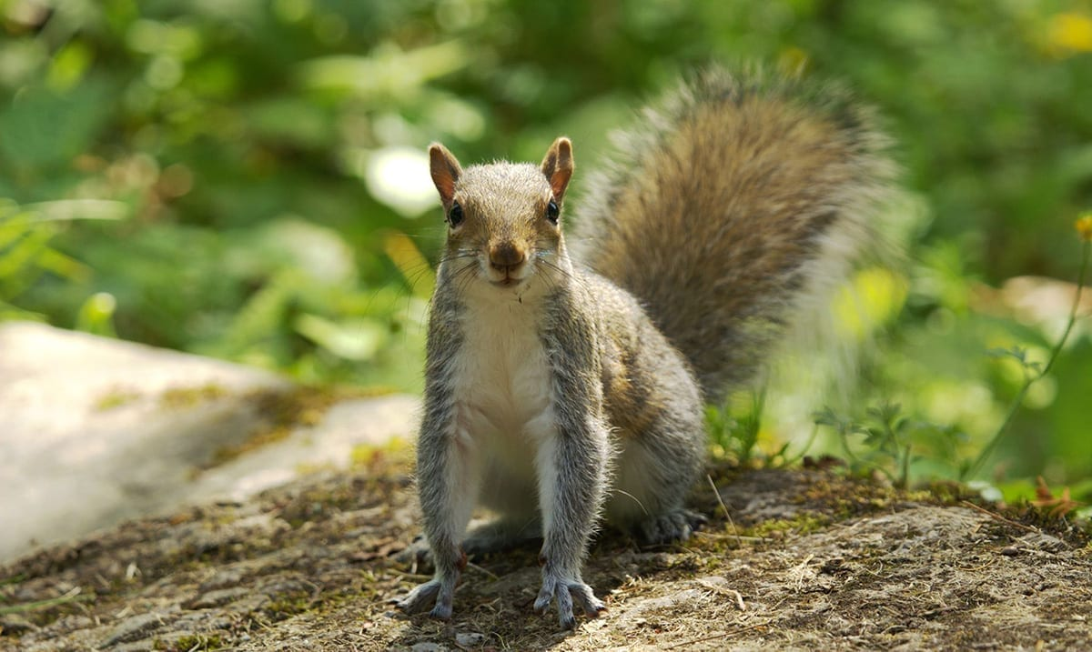 Colorado Squirrel Tests Positive For The Plague And What It Means For Your Pets
