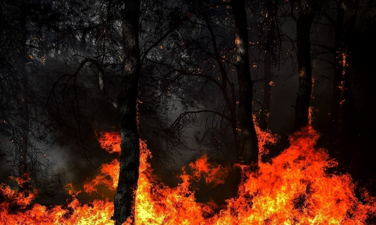 As Wildfire Moves Quickly Across Colorado Rocky Mountain National Park Closes