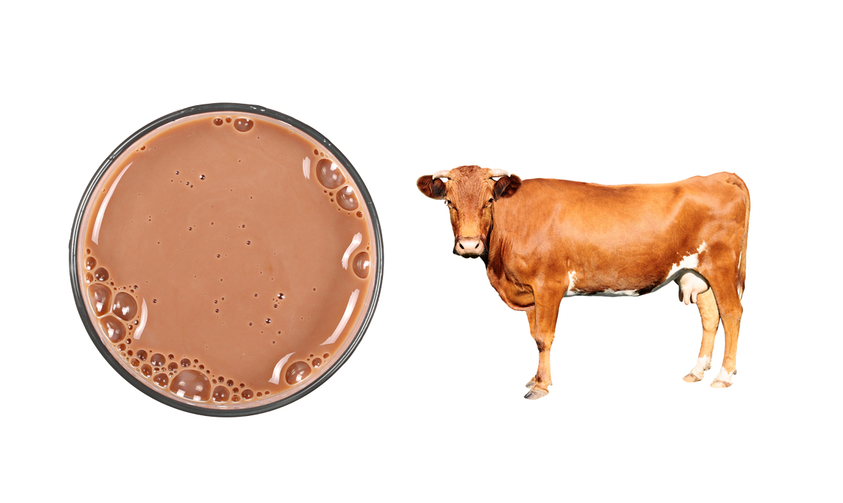 Study Finds Millions of Americans Believe Chocolate Milk Comes From Brown Cows
