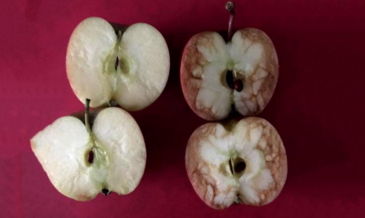 Teacher Sends Powerful Message About How Words Hurt Using Apples
